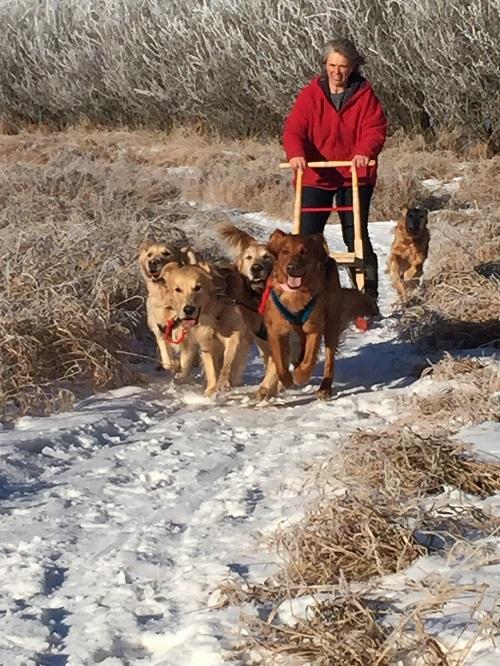 Charmlee Golden Retrievers, Golden Retrievers, Breeders